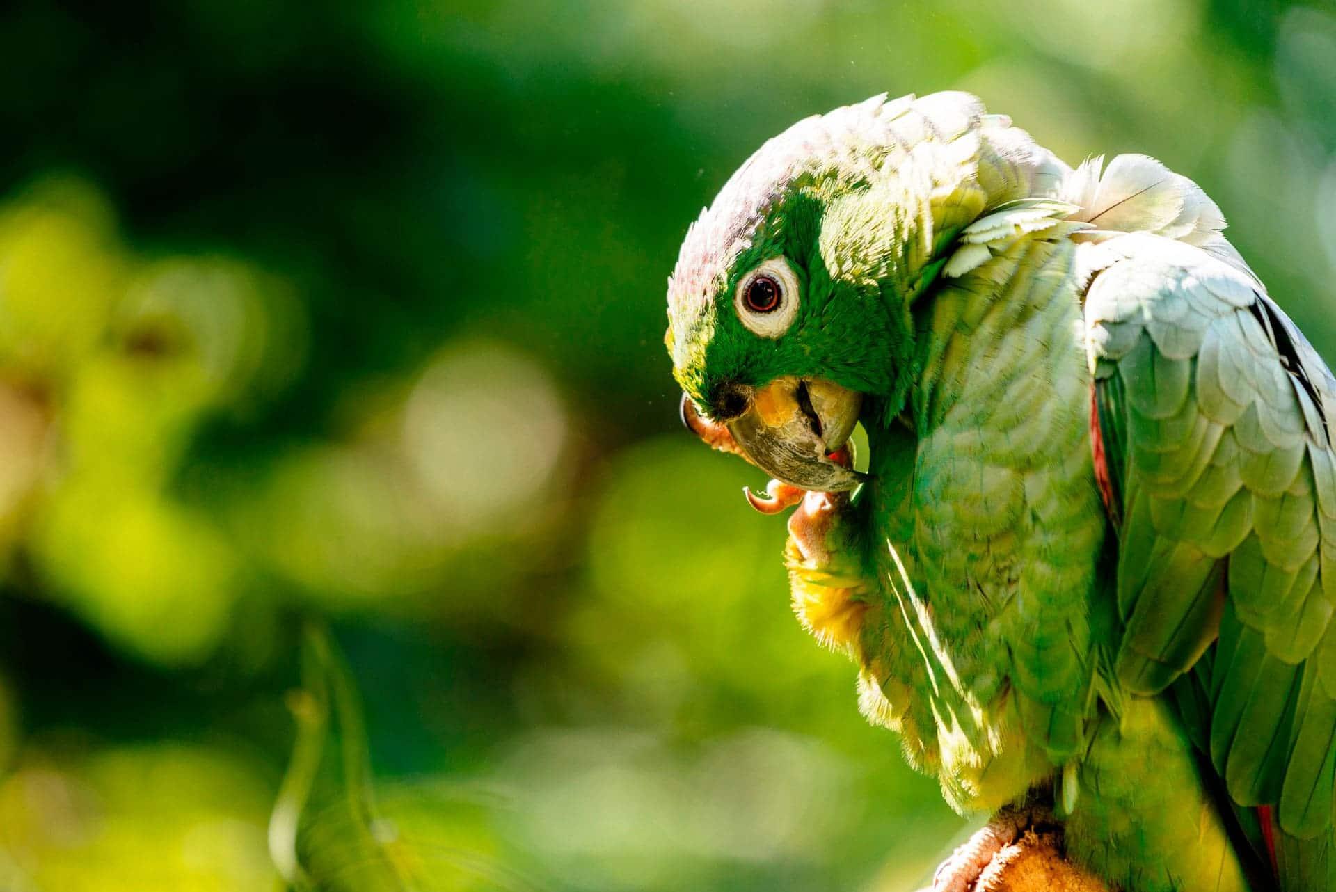 Acércate a la fauna y más típica de la Amazonía peruana. Vive en Yanashpa Village, Tarapoto.